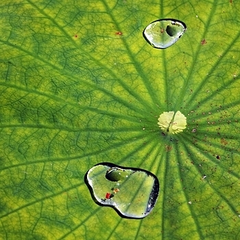 Green leaf with water drops | LENS MODEL NOT SET