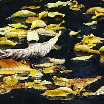 Leaves on wet pavement | LENS MODEL NOT SET <br> Click image for more details, Click <b>X</b> on top right of image to close