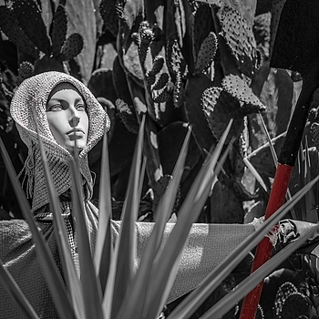 HayWoMan | LEICA MACRO-ELMAR 90MM F <br> Click image for more details, Click <b>X</b> on top right of image to close