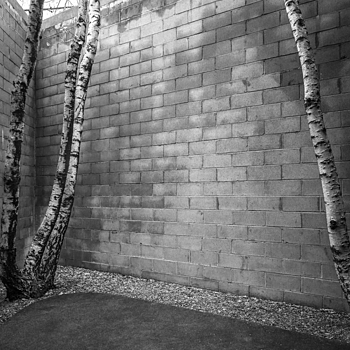 3+1 trunks | LEICA 21MM SUPER-ELMAR-M F/ 3.4 ASPH LENS <br> Click image for more details, Click <b>X</b> on top right of image to close