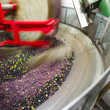Pressing of the olives in Western Liguria | LEICA SUPER-ELMAR 18MM F3.8 ASPH <br> Click image for more details, Click <b>X</b> on top right of image to close