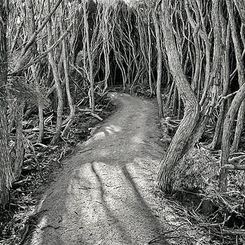 New path through the Melaleuca forest | LEICA ELMARIT 28MM F2.8 ASPH <br> Click image for more details, Click <b>X</b> on top right of image to close