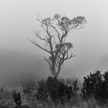 Mt Donna Buang | LEICA SUMMICRON 35MM F2 1ST VERSION