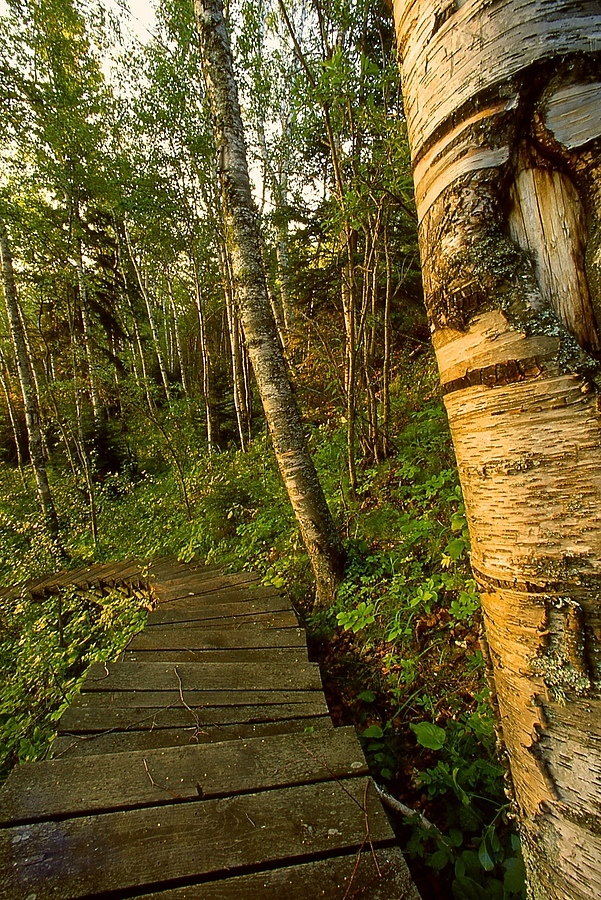 forest path Saskatchewan | CV 15MM / F 4.5 SUPER WIDE HELIAR <br> Click image for more details, Click <b>X</b> on top right of image to close