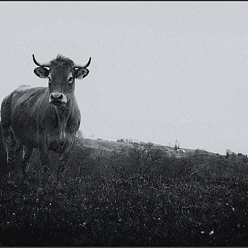 Aubrac | SUMMILUX-M 1:1.4/50 ASPH <br> Click image for more details, Click <b>X</b> on top right of image to close