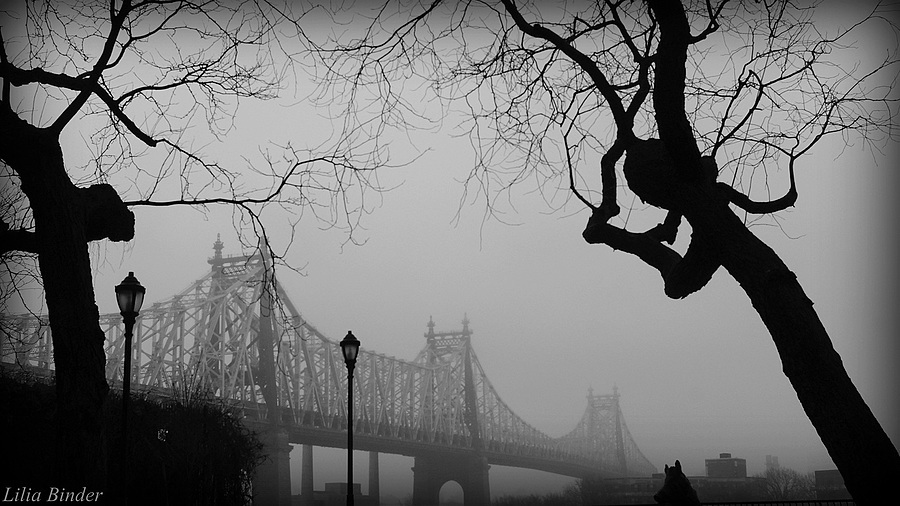 leicaimages.com gallery | foggy day | Leica SUMMICRON 50mm f2 | NEX-5