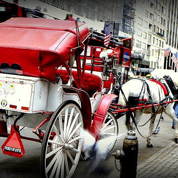 horse & carriage | LENS MODEL NOT SET