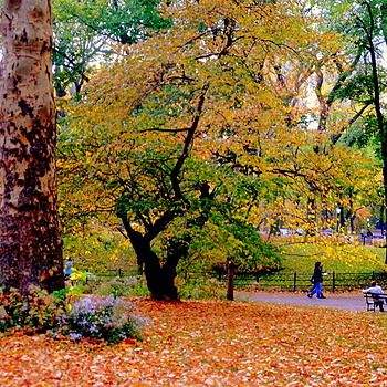 Central Park - Autumn | LENS MODEL NOT SET <br> Click image for more details, Click <b>X</b> on top right of image to close