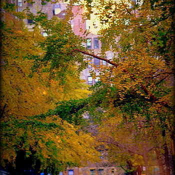 Manhattan street | LENS MODEL NOT SET <br> Click image for more details, Click <b>X</b> on top right of image to close