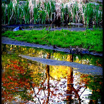 Central Park reflections | LENS MODEL NOT SET <br> Click image for more details, Click <b>X</b> on top right of image to close
