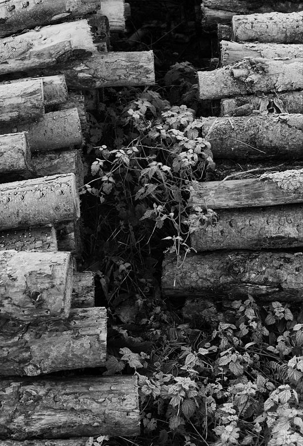 West Acre logs | LEICA SUMMICRON 50MM F2 <br> Click image for more details, Click <b>X</b> on top right of image to close