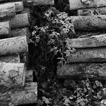 West Acre logs | LEICA SUMMICRON 50MM F2