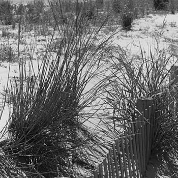 Beach Grass | LEICA SUMMICRON 50MM F2 (RIGID) <br> Click image for more details, Click <b>X</b> on top right of image to close