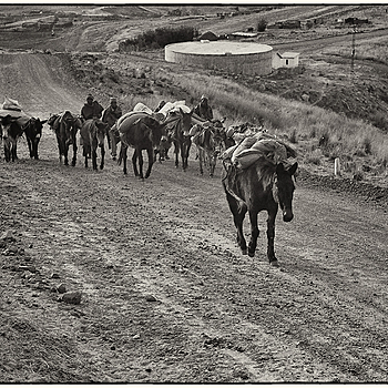 Sotho trader mule train | LEICA SUMMICRON 50MM F2 <br> Click image for more details, Click <b>X</b> on top right of image to close