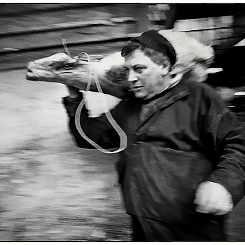"A bummaree ""humping"" a beef hindquarter at Smithfield Market 