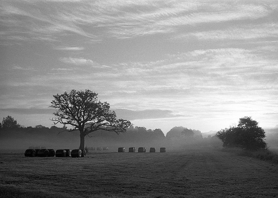 Suffolk Dawn | LEICA SUMMARON 35MM F/2.8 <br> Click image for more details, Click <b>X</b> on top right of image to close