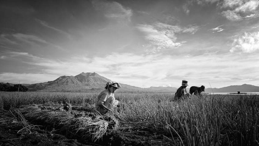 Onion farmer's | LEICA ELMARIT 21MM F2.8 ASPH <br> Click image for more details, Click <b>X</b> on top right of image to close