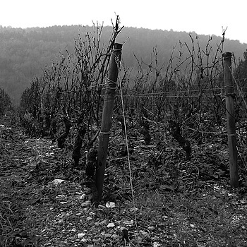 Vines of Burgundy | LENS MODEL NOT SET <br> Click image for more details, Click <b>X</b> on top right of image to close