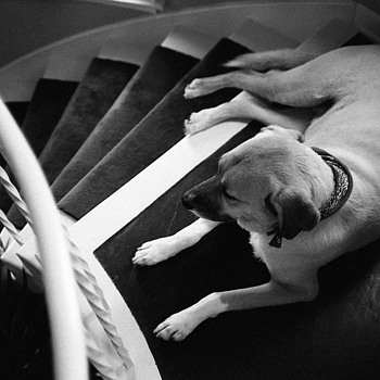 Ruby on the Stairs | ZEISS ZM BIOGON T* F2.0 35MM <br> Click image for more details, Click <b>X</b> on top right of image to close