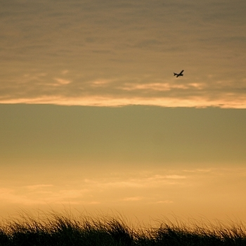 Sunset flight | LENS MODEL NOT SET <br> Click image for more details, Click <b>X</b> on top right of image to close