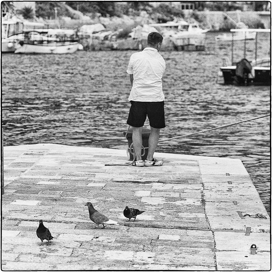Three pigeons | LEICA SUMMICRON 35MM F2. <br> Click image for more details, Click <b>X</b> on top right of image to close
