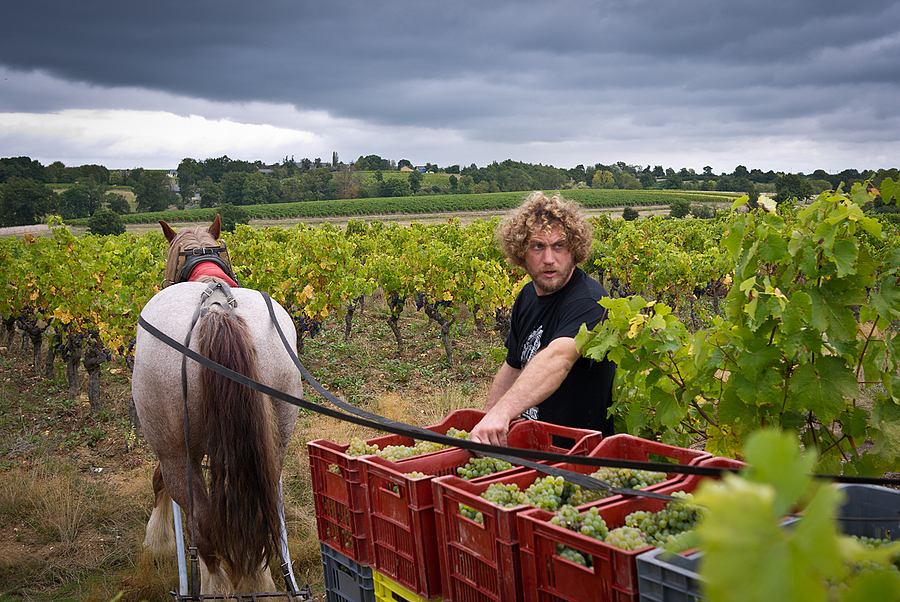French winemaker 02 | X1 ELMARIT 24MM F/2.8 ASPH <br> Click image for more details, Click <b>X</b> on top right of image to close