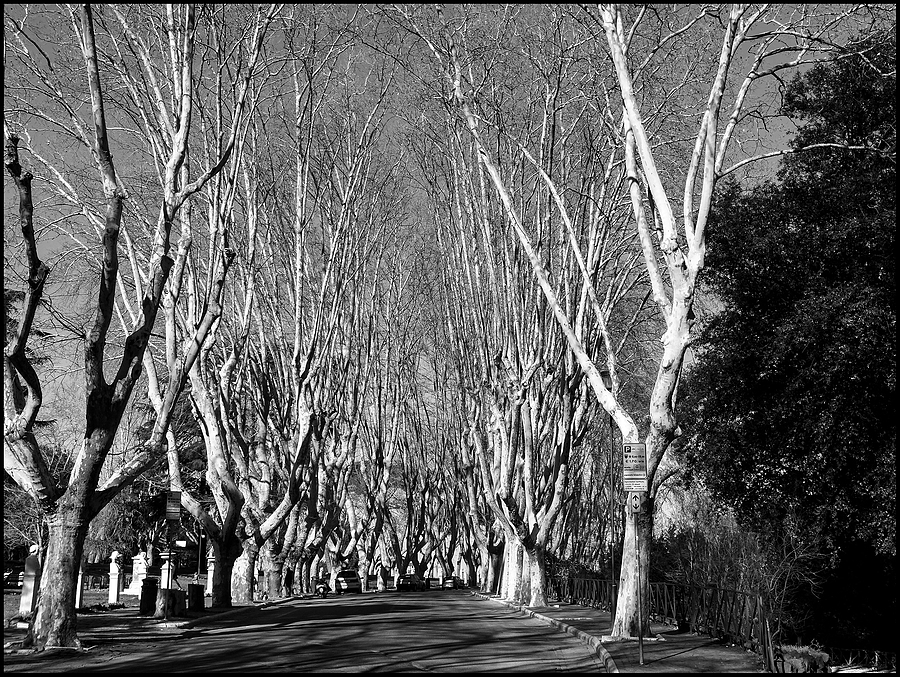 Roma: Gianicolo, tree-lined avenue | DC VARIO-ELMARIT 1:2.8/4.5-108 ASPH <br> Click image for more details, Click <b>X</b> on top right of image to close
