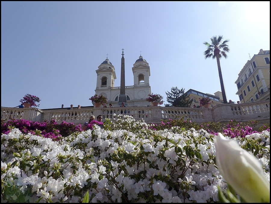 Trinità dei Monti:the Azaleas | DC VARIO-ELMARIT 1:2.8/4.5-108 ASPH <br> Click image for more details, Click <b>X</b> on top right of image to close