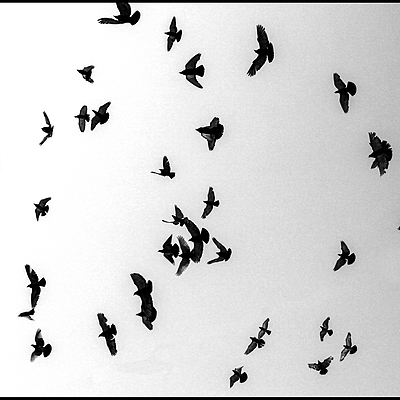 Birds | CANON EF 24-70MM F/4L IS USM