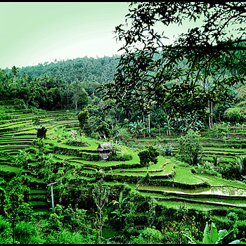 The rice fields of Bali | DC VARIO-ELMARIT 1:2.8/4.5-108 ASPH