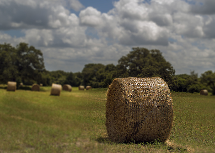 Photo: One-ton bales - Bastrop, TX | SUMMILUX-M 1:1.4/50 ASPH. <br> Click image for more details, Click <b>X</b> on top right of image to close