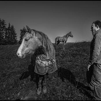 Man with his horses | ZEISS ZM BIOGON T* F2.8 21MM <br> Click image for more details, Click <b>X</b> on top right of image to close
