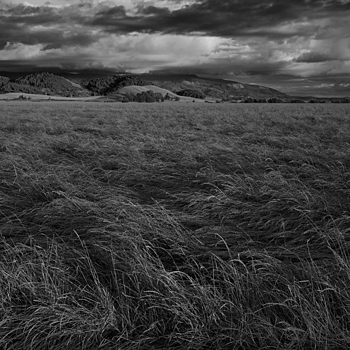 Lodged grass seed | LEICA SUMMICRON 35MM F2 ASPH <br> Click image for more details, Click <b>X</b> on top right of image to close