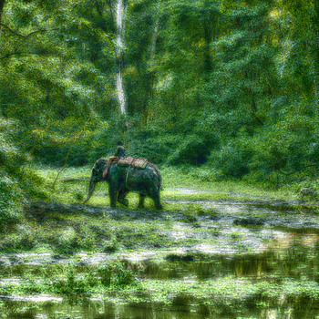 Elephant and jungle | SUMMILUX-M 1:1.4/50 ASPH <br> Click image for more details, Click <b>X</b> on top right of image to close