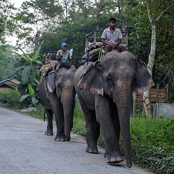 Elephants going home