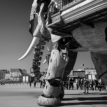 Elephant Nantes | SUMMILUX-M 1:1.4/50 ASPH <br> Click image for more details, Click <b>X</b> on top right of image to close