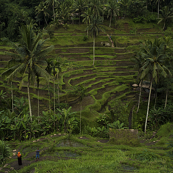 Bali rice terrace | LEICA 28MM SUMMILUX F1.7 AF <br> Click image for more details, Click <b>X</b> on top right of image to close