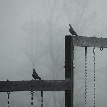 Doves on the swings | LENS MODEL NOT SET <br> Click image for more details, Click <b>X</b> on top right of image to close