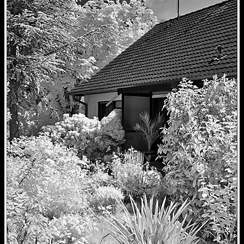 In my garden | LEICA ELMAR 24MM F3.8 ASPH <br> Click image for more details, Click <b>X</b> on top right of image to close