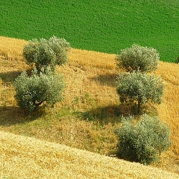 Italian hills: the yellow and the green | DC VARIO-ELMARIT 1:2.8-3.7/7.4-88.8 ASPH <br> Click image for more details, Click <b>X</b> on top right of image to close
