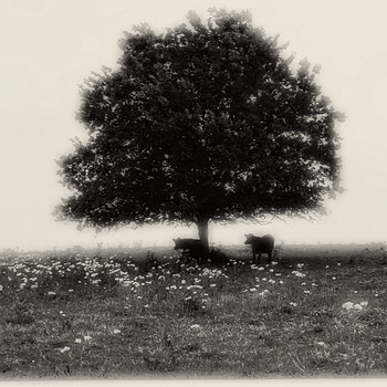 Shade Tree | SUMMILUX-M 1:1.4/50 ASPH <br> Click image for more details, Click <b>X</b> on top right of image to close