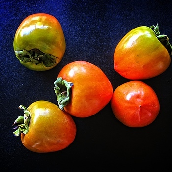Persimmons | LENS MODEL NOT SET <br> Click image for more details, Click <b>X</b> on top right of image to close