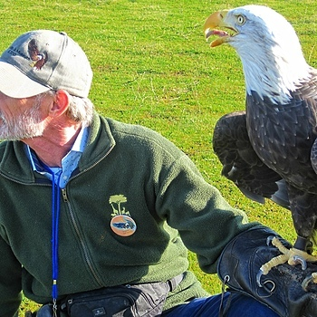 Bald Eagle and Handler | LENS MODEL NOT SET <br> Click image for more details, Click <b>X</b> on top right of image to close
