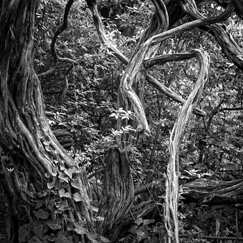 Branches | LENS MODEL NOT SET <br> Click image for more details, Click <b>X</b> on top right of image to close