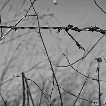 Wire and Twigs | LENS MODEL NOT SET <br> Click image for more details, Click <b>X</b> on top right of image to close