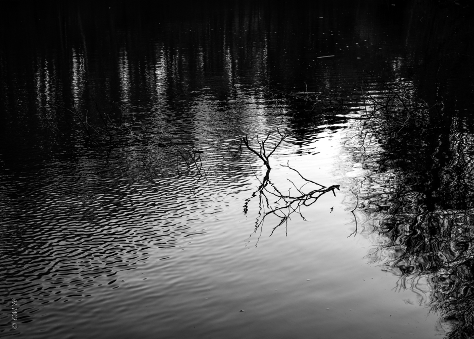 Pond Near Home. | LEICA SUMMICRON 35MM F2 <br> Click image for more details, Click <b>X</b> on top right of image to close