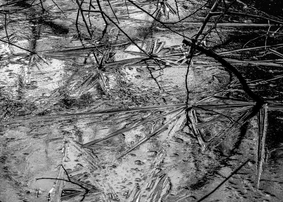 Iced Reeds. | LEICA TELE-ELMAR 135MM F/4 <br> Click image for more details, Click <b>X</b> on top right of image to close