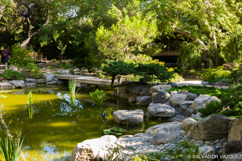 Japanese Garden, Pasadena | SUMMILUX-M 1:1.4/50 ASPH <br> Click image for more details, Click <b>X</b> on top right of image to close