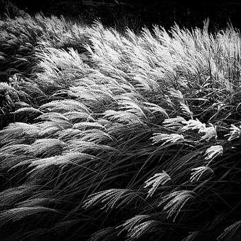 Weeds | LEICA ELMAR 24MM F3.8 ASPH <br> Click image for more details, Click <b>X</b> on top right of image to close
