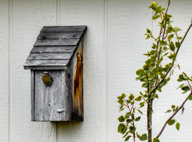 Birdhouse | LENS MODEL NOT SET <br> Click image for more details, Click <b>X</b> on top right of image to close
